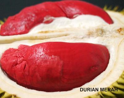 Durian Merah Indonesia